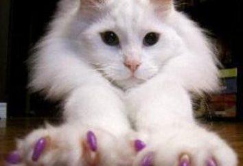 Antitsarapki dla kotów: instrukcje i informacje zwrotne. Antitsarapki cat: Rozmiary