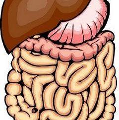 MRT zeigt, dass der Darm? Verfahren zur Untersuchung des Darms