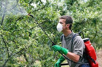 Opryskiwanie drzew owocowych w upadku chronić przyszłe żniwa
