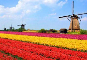 La population des Pays-Bas. Caractéristiques et caractéristiques du pays