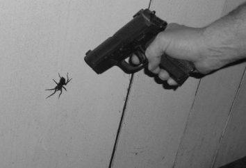 Jak pozbyć się pająków w domu: środków ludowej i chemii
