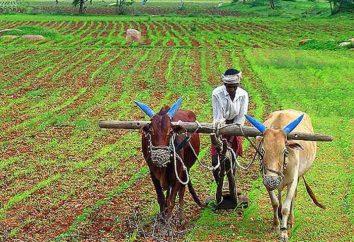 Congratulazioni per l'agricoltura, e la descrizione della tradizione vacanze