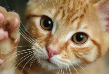 ¿Cuántos gatos tienen garras en sus patas?