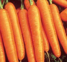 zanahorias cabeza de serie. La elección de las variedades