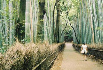 Ecotherapy: jak stres za pomocą lesie