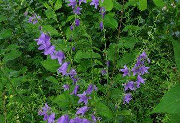Riddle sobre a flor – uma fonte de inspiração e uma maneira de anexar a criança para a bela