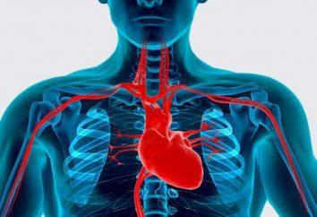 Główne czynniki ryzyka chorób układu krążenia: Opis. Profilaktyka chorób układu krążenia