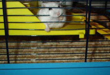 Pourquoi hamster cellulaire tenaille: provoque un comportement indésirable et sa correction