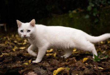 Warum träumt eine weiße Katze? Interpretation von Träumen
