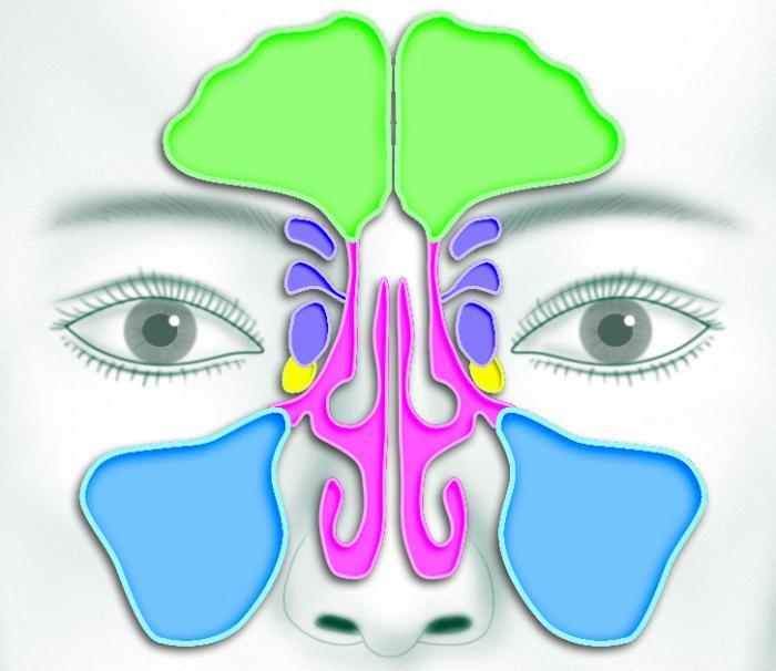 teil des menschlichen riechorgans