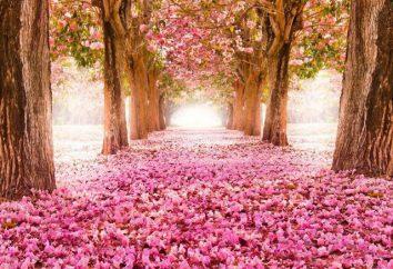Belle adage printemps