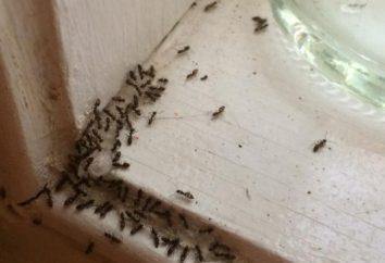 Nauka znaki. Mrówki w domu na co?