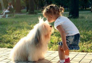 Nowe rasy psów: Opis