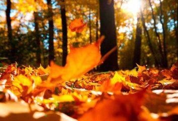 """Un ensayo sobre el tema """"La caída del otoño de la hoja"""" – las características estilísticas y la forma de presentación"""