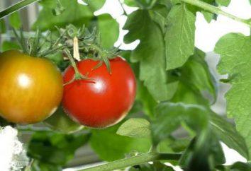 Insalata di pomodori rossi per l'inverno: le ricette