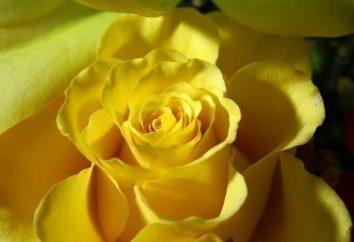 Gelbe Blumen – Trennung oder Liebe