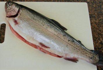 ¿Qué pez es mejor hacer pasteles de pescado? recetas