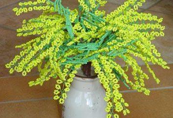 Mimosa Perle: eine Meisterklasse in der Weberei. Wie eine Mimose Perlen machen?