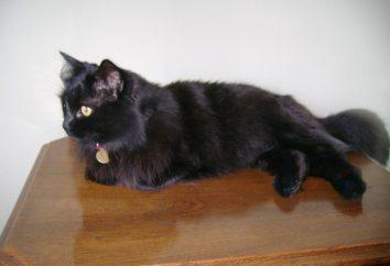 Czarne koty – mała pantera