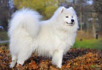 El aprendizaje Libro sueño: un perro blanco lo que sueño?