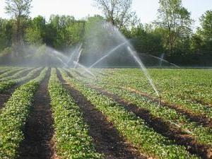 Combien de fois arroser les fraises et tout système d'irrigation est préférable?