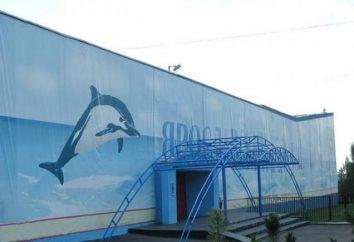 Der Besuch des Jaroslawl-Delphinariums ist eine Explosion von Freude und positiven Emotionen!