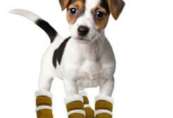 Como a costurar sapatos para cães com suas próprias mãos: Master Class