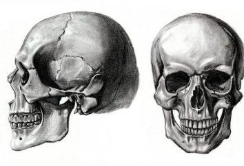 In che modo il cranio cucitura con l'età?