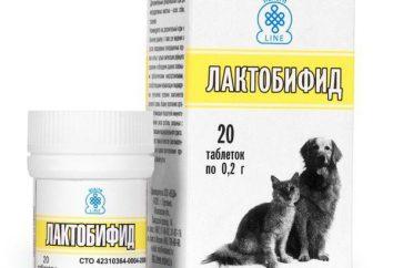 """""""Laktobifid"""" do kotów: Wskazania, w szczególności, stosowanie"""