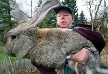 Coelho para iniciantes. Como construir negócios em coelhos reprodutores