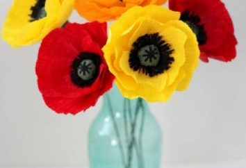 Flor encantadora de doces com as mãos. papoulas brilhantes com um segredo dentro
