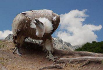 la familia Accipitridae aves. Descripción de los representantes más prominentes