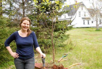 tar Birch: aplicação em horticultura