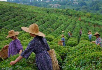 Tea georgiano: descrição, grau