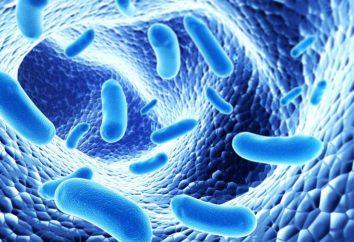 Wie den Körper nach Antibiotika wiederherzustellen? Tipps und Tricks
