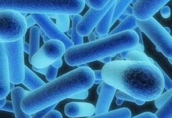 Choroba Henocha za: patogeneza, objawy, wykrywanie