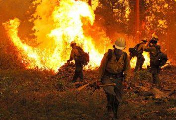 les feux de la Couronne: caractéristiques de base et classement