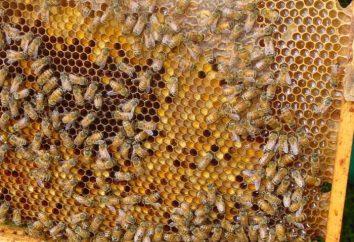 Ambrosia. propriétés utiles du produit d'abeille