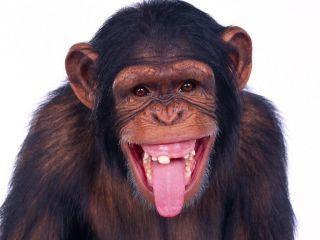 Gdzie są małpy: ich naturalne siedlisko