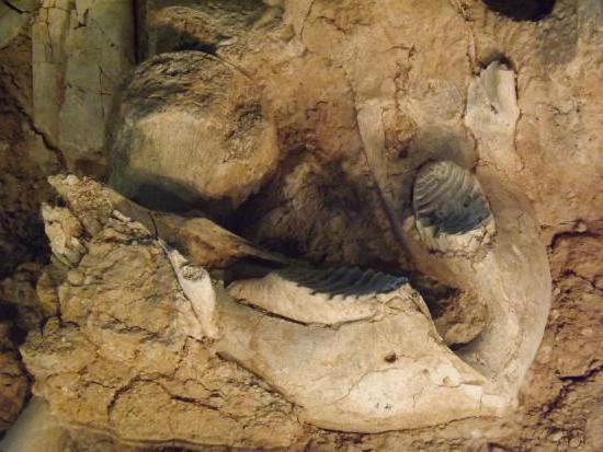 fossiles elfenbein wirkung
