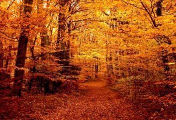 """Wiersz """"Las jesienią"""" – małe arcydzieło napisał Twardowski"""