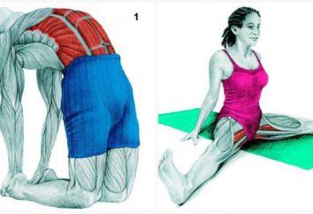 34 images qui vous permettent de voir, quels muscles vous étirez