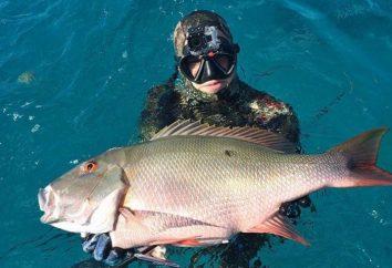 Comment choisir un costume pour spearfishing: avis de professionnels