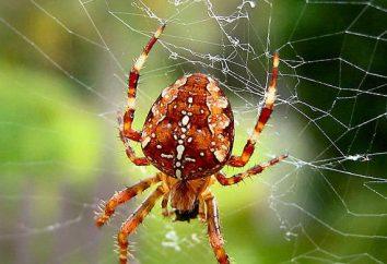 Che cosa fa un ragno nei sogni?