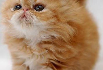 koty kastracji. W jakim wieku najlepiej jest przeprowadzić tę procedurę