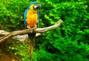 Specie di pappagalli: foto, nome. Come determinare il tipo di pappagallo?