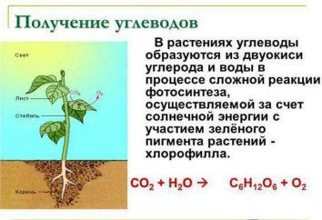 Riserva di carboidrati di piante, il suo ruolo nel processo della vita