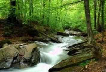 Naturgebiet in der Ukraine: Steppe, Waldsteppe, Mischwald, Berge
