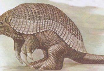 armadillo gigante: descrizione degli animali, habitat