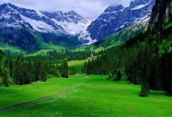 Montañas Naturaleza: Animales y plantas